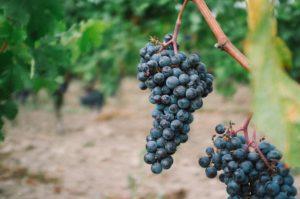 Wine making, beverage scientist