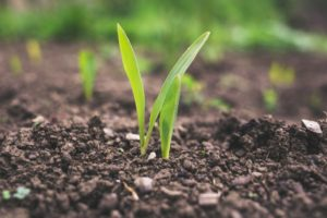 Agriculture, Plant science